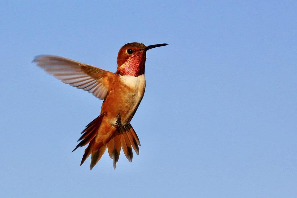 The hummingbird symbolizes joy, swiftness and lightness.