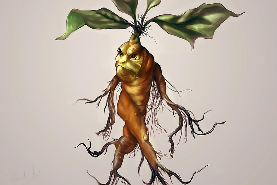 The magical mandrake was featured in the Harry Potter books and films.