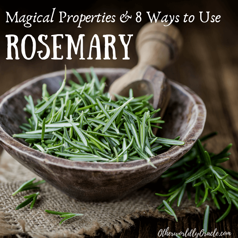Rosemary Magical Properties & 8 Ways to Use Rosemary in Ritual, Spells and More