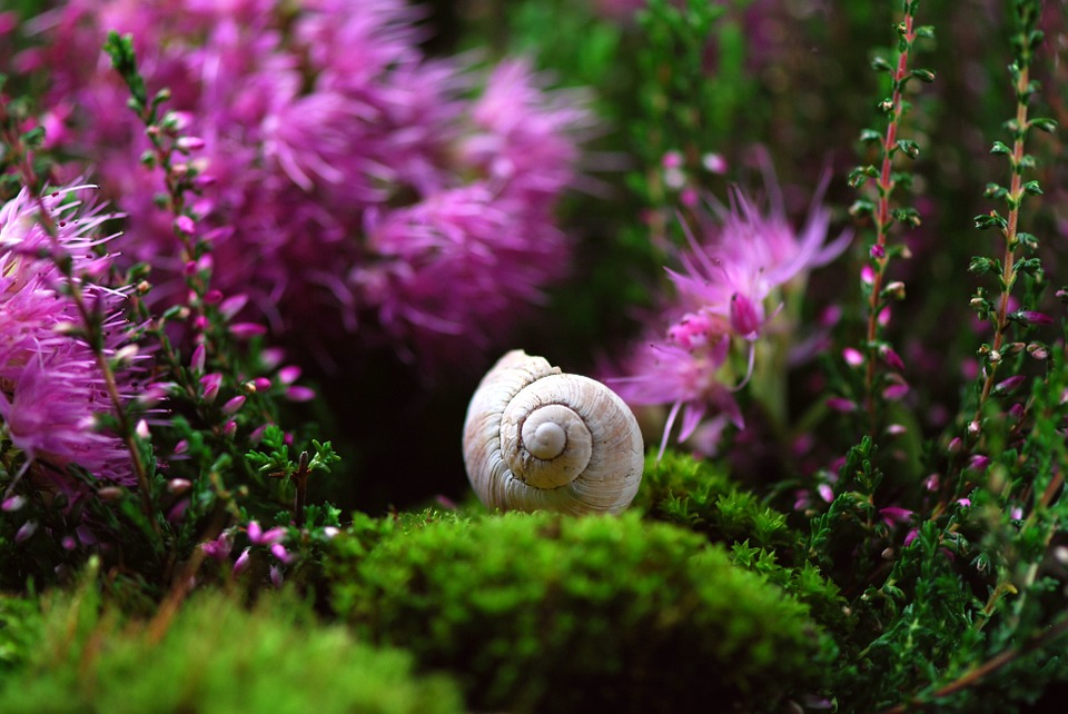 The snail spirit animal brings us messages of eternal life.