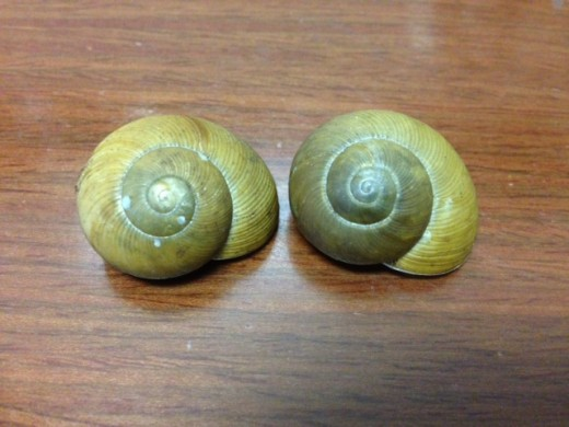 The snail spirit animal's shell is the spiral and was sacred to many ancient cultures.