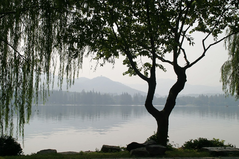 Willow tree bark is used to make salicin - aspirin yet the pharmaceutical companies warn against us using it.
