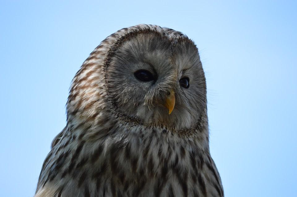 The owl spirit guide isn't a bad omen, he's a psychopomp and teacher.