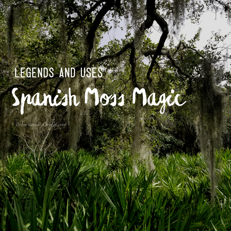 Spanish Moss Uses, Legends and Magic Properties