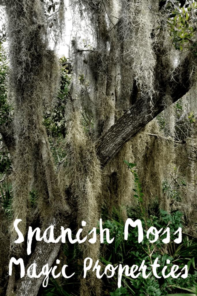 Spanish Moss Uses, Legends, Medicine and Magic Properties