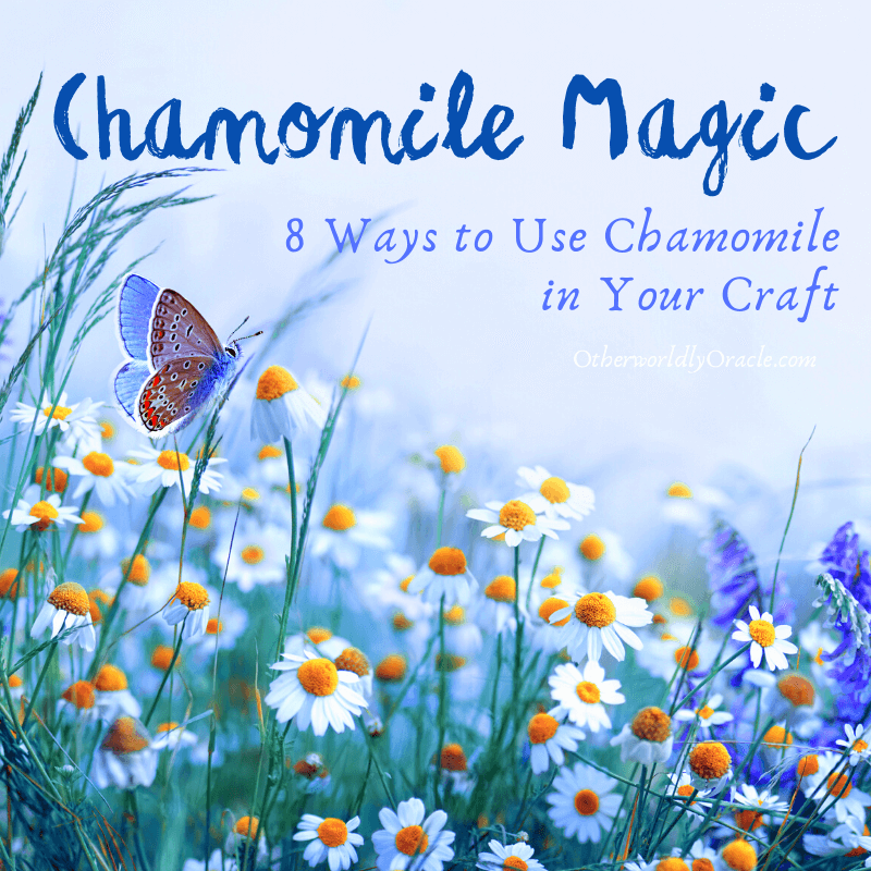 Chamomile Magic: 8 Ways to Use Chamomile in Your Craft