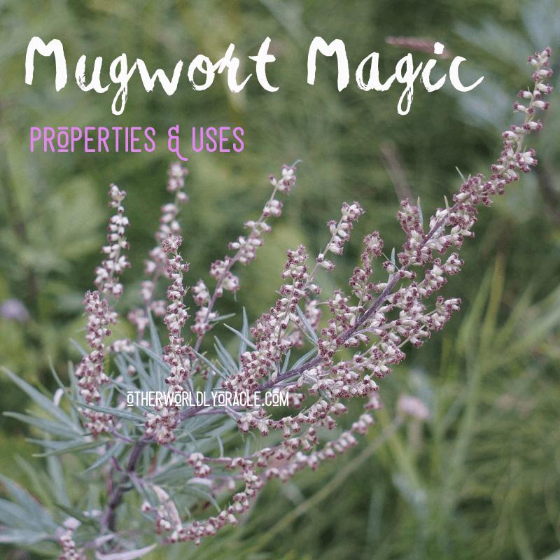 Mugwort Magic Properties & 6 Powerful Uses