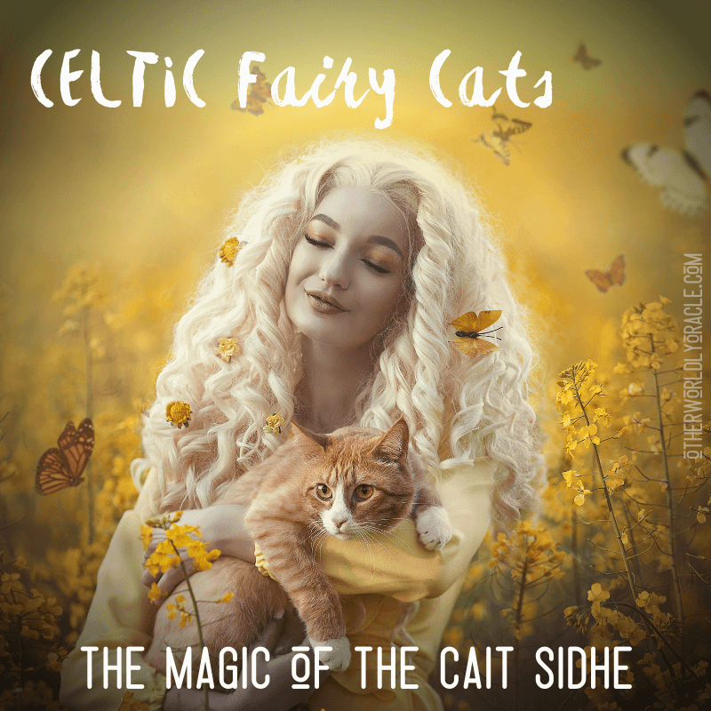 Fairy Cats: The Magic & Lore of the Cait Sidhe