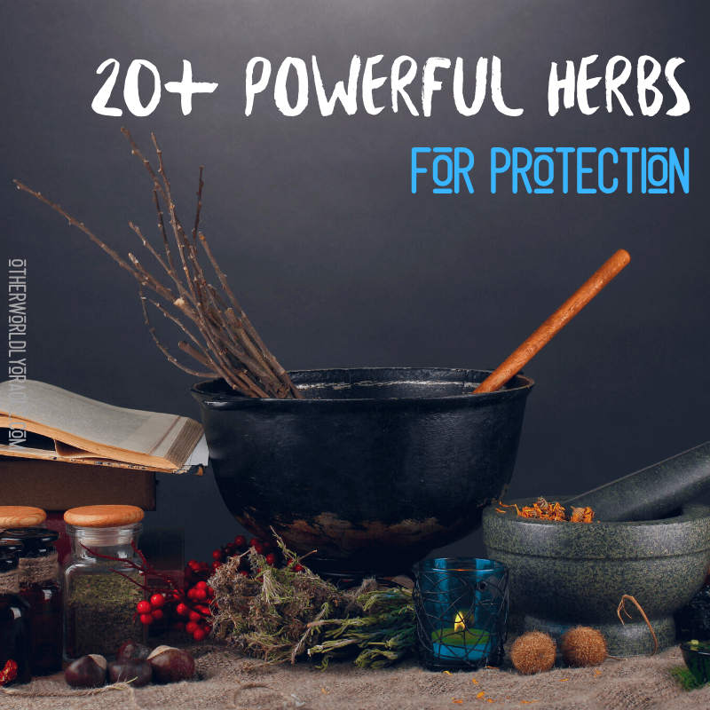 Herbs for Protection: 20+ of Our Favorites to Ward Off Negativity