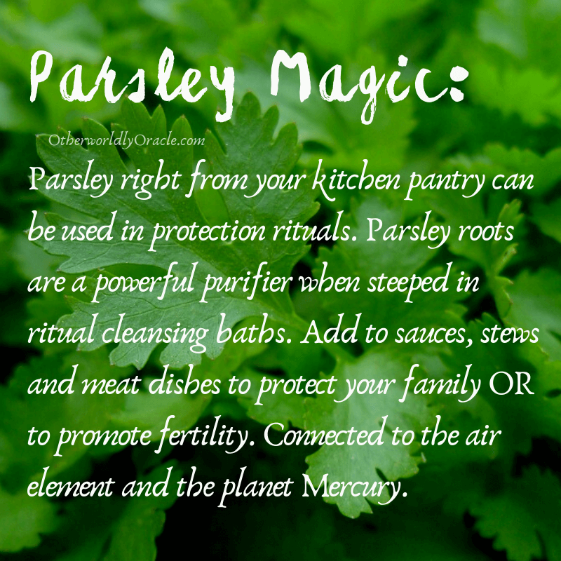 A wonderful herb for protection and purification is parsley