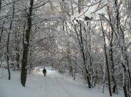 Schneebedeckte Bäume.