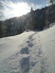 Fuißspuren im Schnee. Da bekomme ich fast wieder Lust auf den Winter...