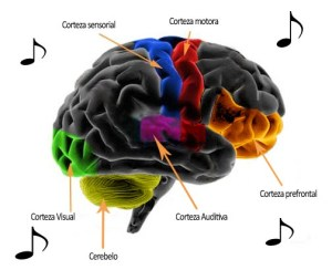¿En qué parte del cerebro encontramos la música?