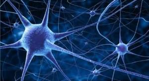 El grupo de neuronas que detecta la 'música' de las palabras