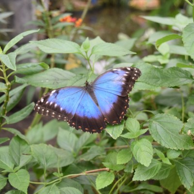 Family Day Out -The Butterfly Farm and Stratford-upon-Avon