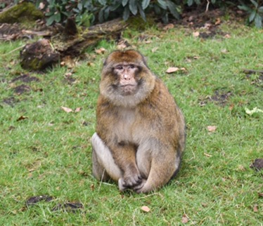 Family Day Out in Staffordshire I Monkey Forest review