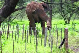 Vor einigen Jahren durchkreuzte ein Elefantenbulle unsere Farm