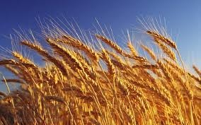 пшени