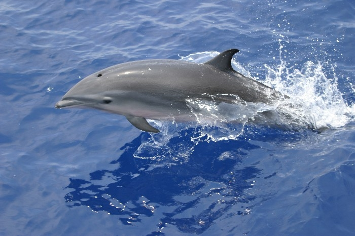 Fraser S Dolphin Ocean Treasures Memorial Library