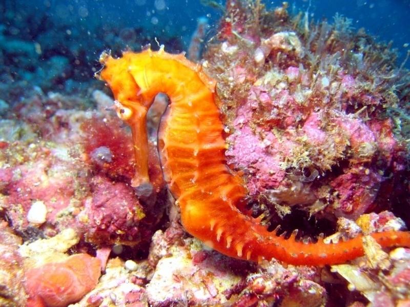 Exotic Animal Wallpaper Seahorse Quot Ocean Treasures Quot Memorial Library