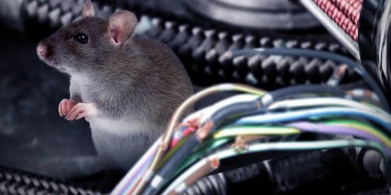 Tips Mencegah Tikus Bersarang di Dalam Mobil