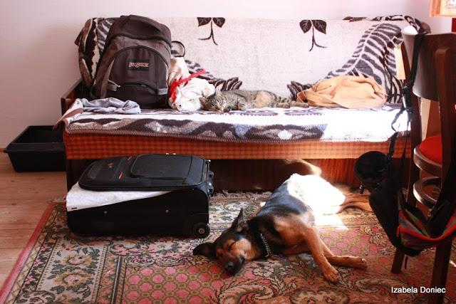 szczawa z psem otojanka wakacje góry kot