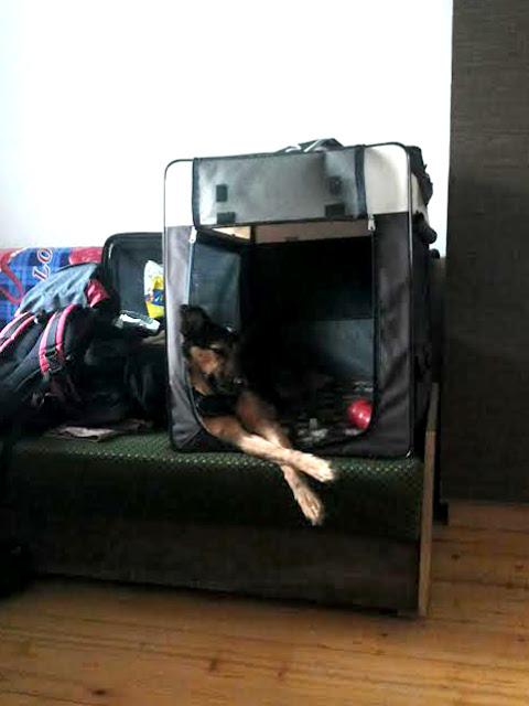 szczawa z psem otojanka wakacje góry