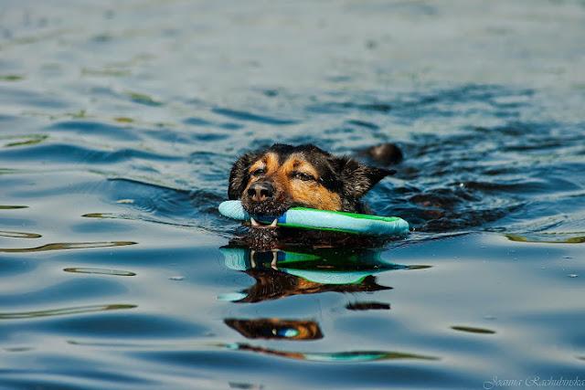 Chuckit! Amphibious Boomerang otojanka