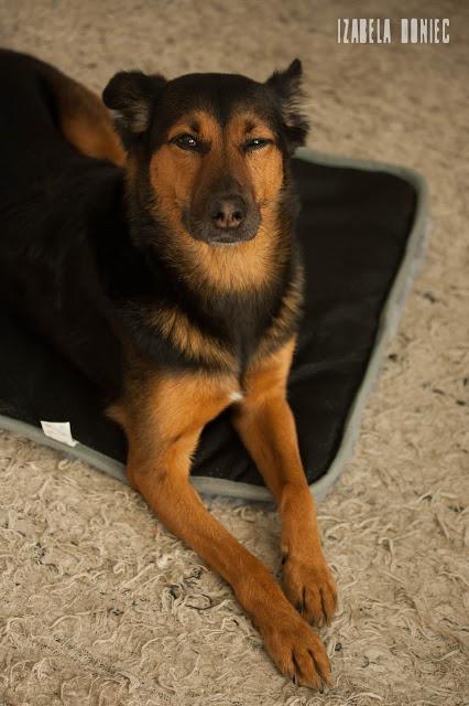 posłanie dla psa materac kocyk trixie midwest otojanka