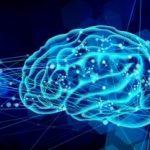 脳科学のイメージ画像