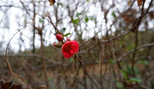 ウォーキングコース 八王子 長池公園 (12月)