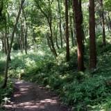ウォーキングコース 夏におすすめ木陰の中をゆったり歩ける 県立座間谷戸山公園