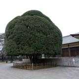 ウォーキングコース 東京武蔵野にたたずむ広大な敷地と1700本の桜がある ウオーキングに最適な都立小金井公園