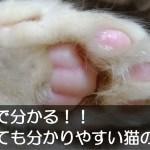 3分で分かる!!とっても分かりやすい猫の歴史