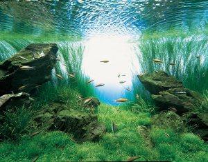 出典:http://www.fishlore.com/