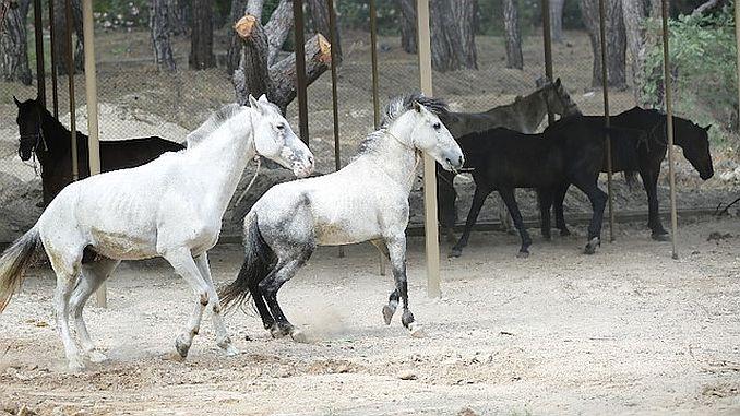 antalyada faytonculuk sona erdi atlar hayvanat bahcesine teslim edildi