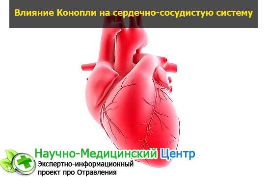 Как конопля влияет на сердце легальна ли в россии конопля
