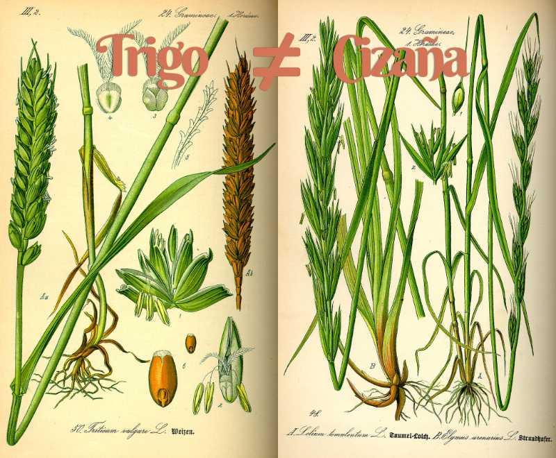 Sostenibilidad en el turismo: cómo separar el trigo de la cizaña