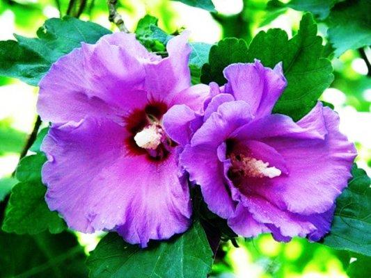 hogyan készítsük el a jamaikai virágot a gyors fogyáshoz status