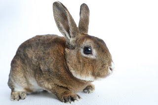 a rabbit around the