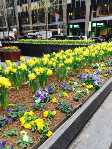 Spring 2016 NYC