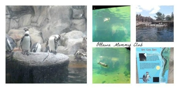 Rosamond Gifford Zoo- Penguins