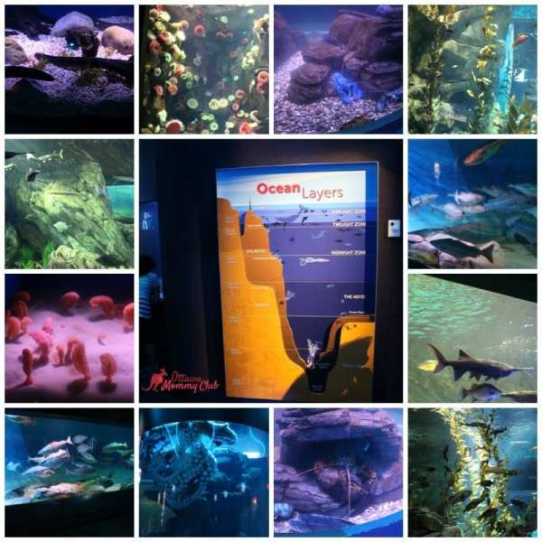 Ripley's Aquarium canadian waters 1
