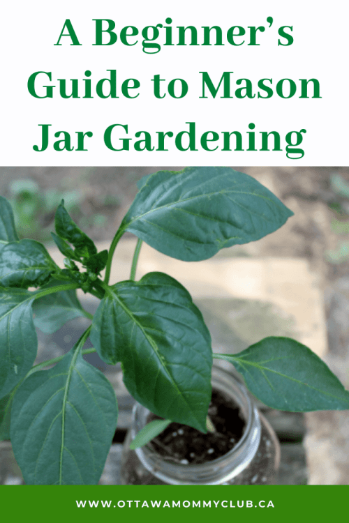A Beginner's Guide to Mason Jar Gardening