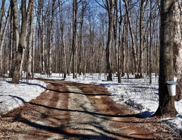 Sugar Bushes in Ottawa and Surrounding Areas