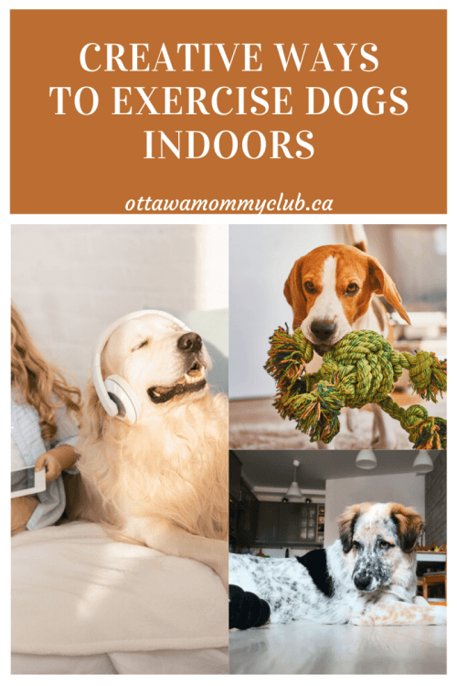 Creative Ways to Exercise Dogs Indoors