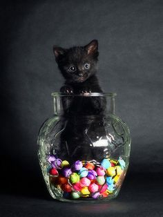 Cat Candy Bowl