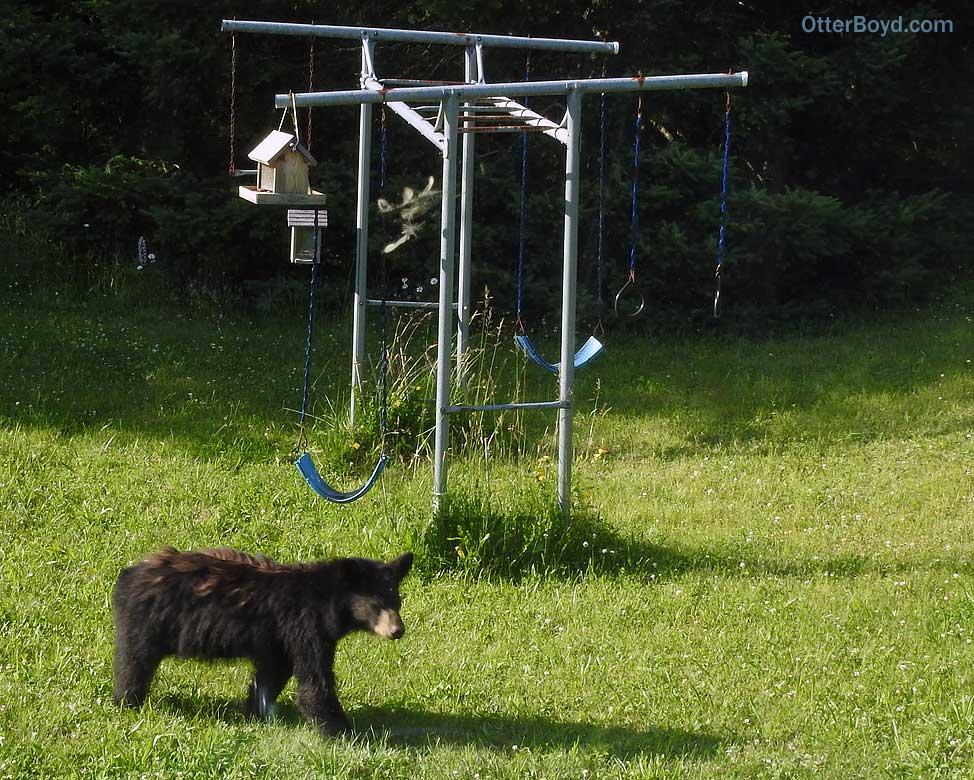 black bear cub in playground