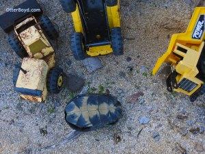 blandings turtle shell markings toy trucks