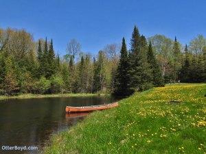 dandelions in bloom canoe and backyard pond